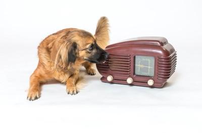 ラジオを覗き込む犬
