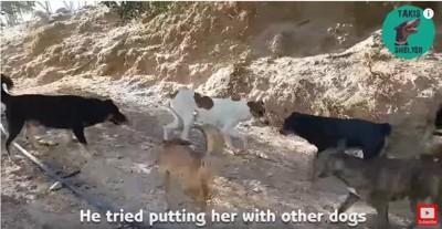 犬仲間から逃げる犬
