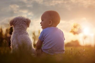 赤ちゃんと子犬の後ろ姿