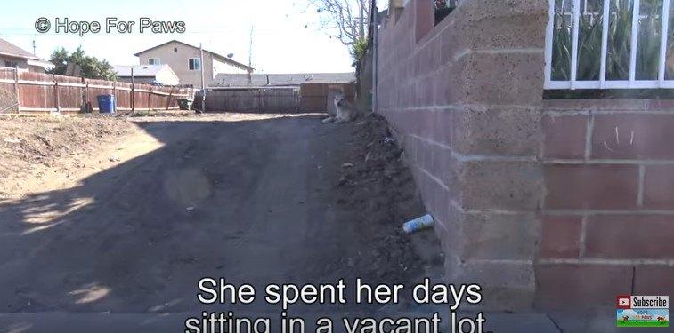 発見された犬