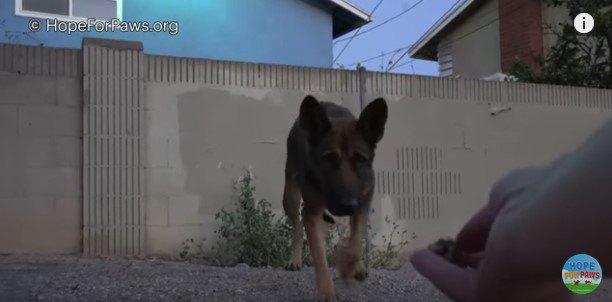 人に近づく犬