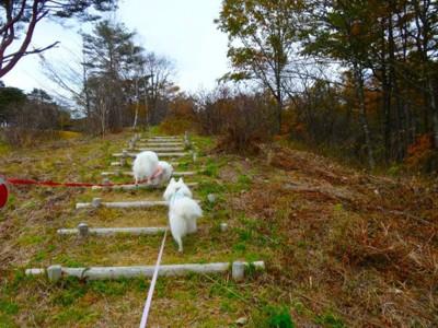 丘を登る犬
