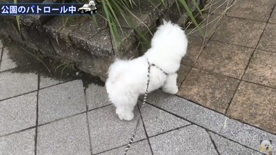 花壇に近寄る犬