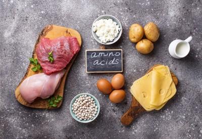 アミノ酸が豊富な食品