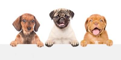 3匹の犬の笑顔