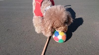 ボールで遊んでいる