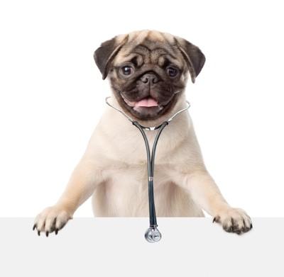 聴診器をしている犬