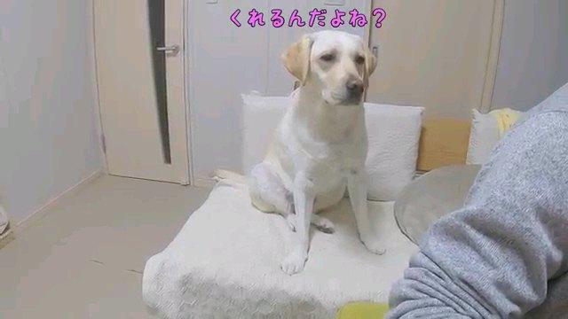 くれるんだよね?~字幕