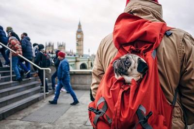イギリスの犬
