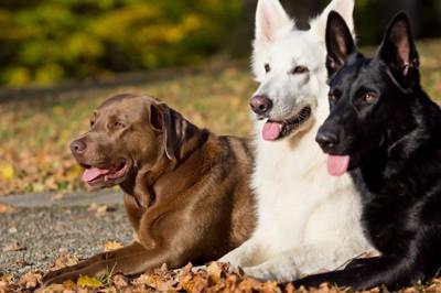 大型犬3匹