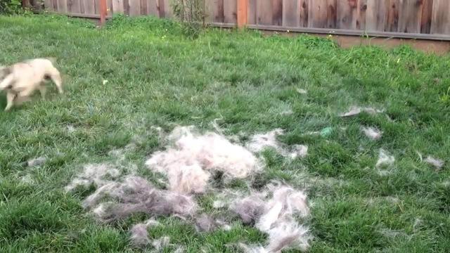 小さい犬と毛のアップ