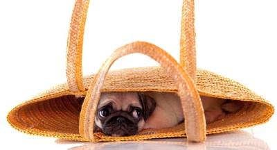 手提げカバンの中に隠れている犬