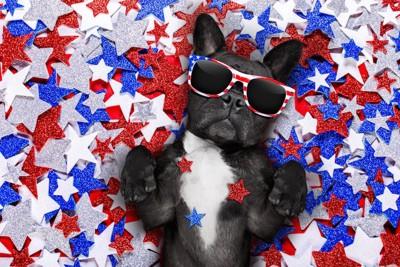 アメリカの国旗の柄のサングラスをした犬