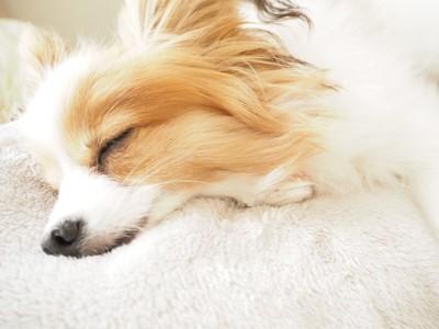 気持ちよく寝ている犬