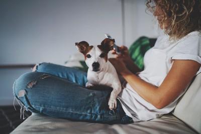 飼い主さんの膝の上でくつろぐ犬