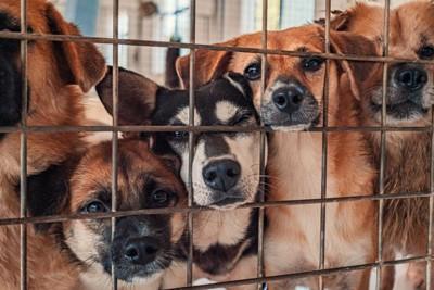 シェルターの犬たち