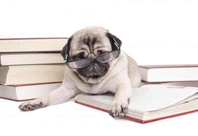 読書中のパグ