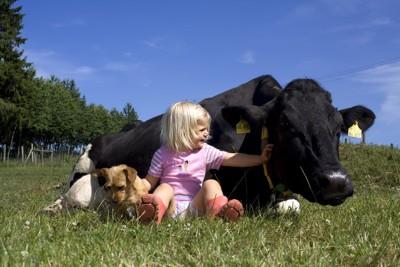 犬と少女と牛