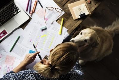 書類を広げる女性と犬