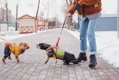 散歩中に他の犬を威嚇する犬