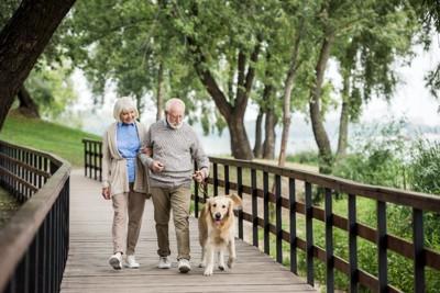 散歩を楽しむ老夫婦と犬