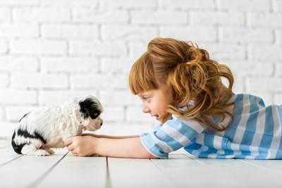 子犬と女の子
