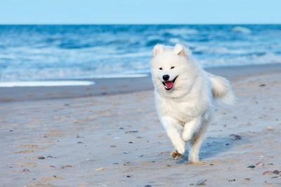 浜辺を走る犬