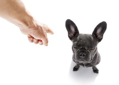 叱られて目を瞑る黒い犬