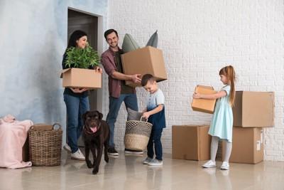 引っ越しの段ボール箱を持つ家族と犬