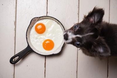 犬と目玉やき