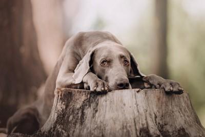 木の上に登る犬