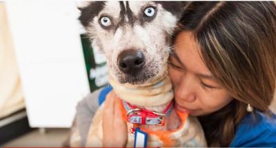 ハスキー犬を抱きしめる女性