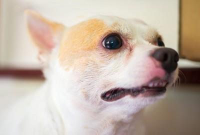 緊張気味の犬