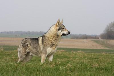 草原の中に立つ犬