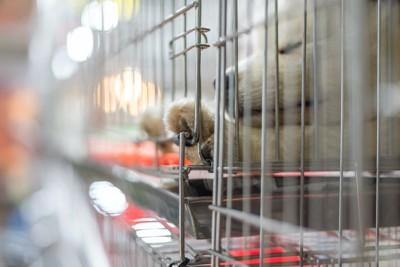 ペットショップでケージの中にいる子犬