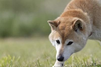 前を見据えている犬の写真