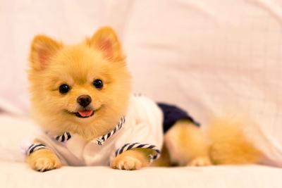 ベッドに居座る犬
