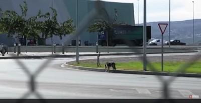 路上を歩く犬