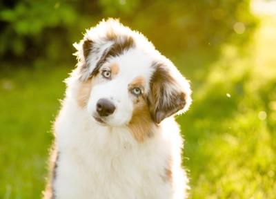 首を傾げてこちらを見つめる犬