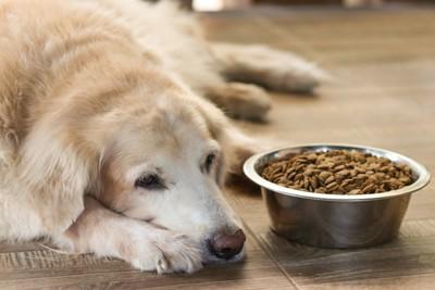 ドッグフードを食べないシニア犬