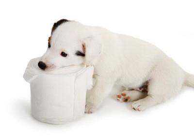 トイレットペーパーと犬