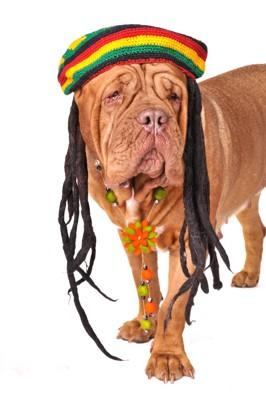 レゲエ風の犬