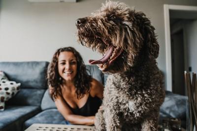 あくびをする犬と女性の飼い主