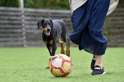 一緒にボールで遊ぶ女性と犬