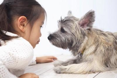 犬の目線になって見つめる女の子