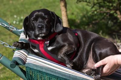 カートに乗る黒い犬