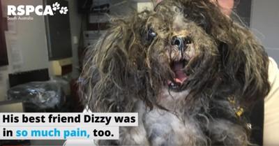 目が隠れるほどに毛が固まった犬