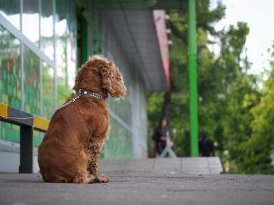 店先に繋がれている犬の後ろ姿