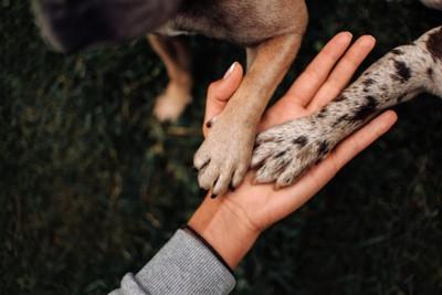 人の手のひらに乗っている犬の手2つ