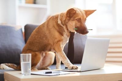 パソコンで調べ物をする犬